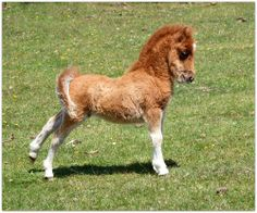 Look at me Mom, is this good confirmation? Cutest little horse!