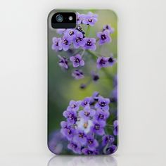 Rosmary Flower iPhone & iPod Case by Richard Torres Photo - $35.00