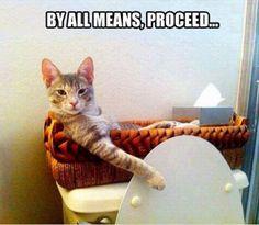 Washroom attendant kitty