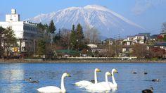 盛岡の白鳥飛来地<高松の池>