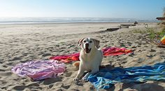 Pet Friendly OR/WA Coast link :) http://www.beachcombersnw.com/petfriendly_oregon.php