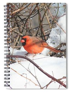 """This 6"""" x 8"""" spiral notebook features the artwork """"Northern Cardinal"""" by Karen Silvestri on the cover and includes 120 lined pages for your notes and greatest thoughts."""