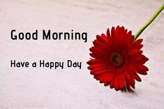 A collection of Beautiful Good Morning Images, beautiful good morning pictures, whatsapp good morning images and quotes. Sweet Good Morning Images, Morning Images In Hindi, Good Morning Picture, Morning Pictures, Good Morning Wishes, Good Morning Quotes, Forgiveness Quotes, Learning To Let Go, Happy Birthday Images