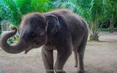 Thaïlande, 4 choses à faire à Krabi