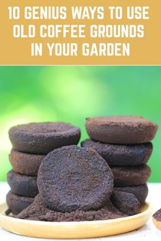 10 Genius Ways To Use Old Coffee Grounds In Your Garden Coffee grounds left over from freshly brewed coffee have many uses in the garden. You don't necessarily have to be a coffee fan to use the grounds in your garden. Many coffee shops offer them for Growing Plants, Growing Vegetables, Growing Greens, Growing Tomatoes, Growing Orchids, Organic Gardening, Gardening Tips, Garden Compost, Allotment Gardening