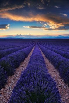 Plateau de Valensole, Provence-Alpes-Côte d'Azur, France, by Julien Delaval, on 500px.