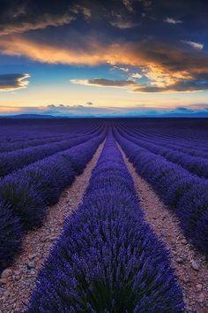 Plateau de Valensole, Provence-Alpes-Côte d'Azur, France,by Julien Delaval, on 500px.