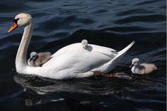 20 magnifiques photos de mamans avec leurs petits.