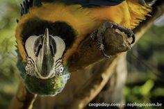 Animais - RepLago - Rep Lago - Acampamento - Natureza - Verde - mata - bicho - ave - arara