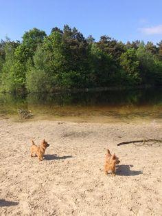wilma van es @wilmabve #synchroonkijken dag 4. Waarde.  Mijn 'achtertuin' en mijn hondjes. 2 vd 3 grote waardes in mijn leven.