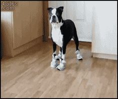 """They fully understand the concept of """"walking in someone else's shoes"""" 