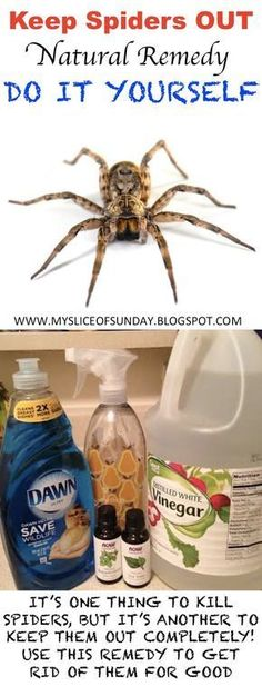 DIY SPIDER KILLER - Natural Remedy to keep spiders out of your home for good ! -Empty Spray Bottle -Essential Oil, Peppermint drops) -Essential Oil, Tea Tree drops) -Dish Soap drops) -White Vinegar (optional) (tablespoon -warm water shake and use Keep Spiders Away, Get Rid Of Spiders, Do It Yourself Camper, Do It Yourself Home, Handy Gadgets, Spider Killer, 1000 Lifehacks, Insect Repellent, Mice Repellent