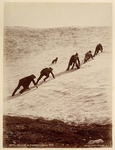 Scaling a snowdirft, Snowy Mountains, c. 1900, by Kerry & Co.