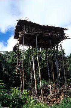Korowai Home . Papua New Guinea