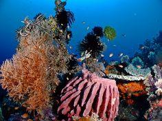Pemuteran North West Bali, snorkel and dive paradise