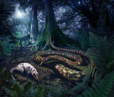 Millions of years ago, the common ancestor of all living snakes — a long creature with tiny hind limbs as well as ankles and toes — could be found slithering over the damp soil of forests in search of soft-bodied prey, a new study finds.