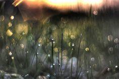 Rain and sun blur