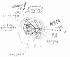 Siegel, D. J., & Bryson, T. P. (2011). The Whole-Brain Child: 12 Revolutionary Strategies to Nurture Your Child's Developing Mind. Delacorte...