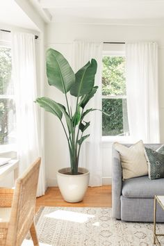 house flowers indoor 546413367289671437 - Home Update: Bringing Summer In Source by ddenestonnoir Home Living Room, Living Room Decor, Interior Plants, Interior Design, Interior Colors, Interior Ideas, Interior Inspiration, Decoration Plante, House Plants Decor