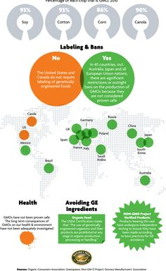 Infographic genetically modified food, plant based diet, food labels, eu na Healthy Recipes On A Budget, Whole Food Recipes, Global Map, Genetically Modified Food, Quick Healthy Breakfast, Food Labels, Plant Based Diet, Genetics, Health And Wellness
