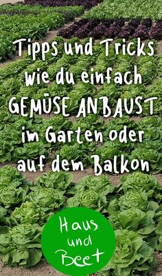 Growing vegetables - house and bed - Trend Innen Pflanzen 2020