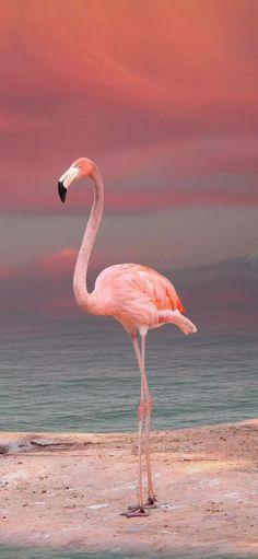 Flamingo Art, Pink Flamingos, Animal Print Background, Sailor Moon Wedding, Animals And Pets, Cute Animals, Zoo Photos, Rose Flower Wallpaper, Bird Quotes