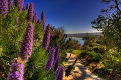 The path leading to La Jolla Cove could easily be called the Path to Paradise...and it's lined with beautiful flowers! You've got to see this place for yourself. Book a San Diego vacation rental soon!