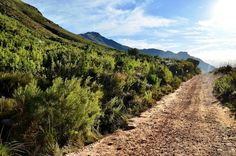 Beautiful Trail Through Jonkershoek Nature Reserve, South Africa