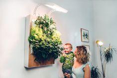Herbert est le petit nouveau des objets connectés. oui, j'ai bien dit connecté. Ce n'est pas tout. Herbert est un jardin mural, hydroponique et connecté. Tout ça forme un joli tableau végétal de légumes, pouvant servir d'appoint pour votre cuisine.