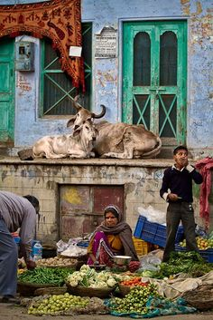 Vegetable market with cows. Varanasi, India