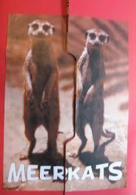 meerkat lapbook