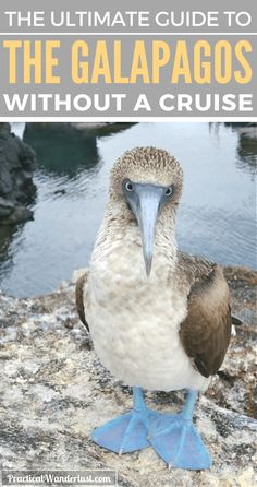 You don't need a cruise to visit the Galapagos Islands in Ecuador. Save a ton of money with this budget-friendly alternative! for Galapagos Islands travel! http://www.southamericaperutours.com/southamerica/12-days-wonders-of-machu-picchu-and-galapagos.html