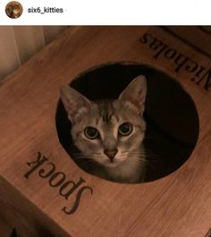 Lovely shot from @six6_kitties  #cat #catsofinstagram #cats_of_instagram #catfurnature #catfurniture #catsinboxes #cattoy #INSTACAT_MEOWS #cutecat #PurrMachine #catsinboxes #catbox #Excellent_Cats #BestMeow #dailykittymail #thecatniptimes #catcube #catpod #ArchNemesis #FlyingArchNemesis #myindoorpaws #ififitsisits #cutecatcrew #catchalet #catnip #themeowdaily #kitty #dailykittymail #catgrass