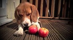 Resultado de imagen para perros fruta