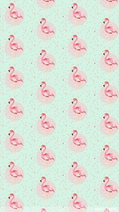 flamingos                                                                                                                                                     Mais