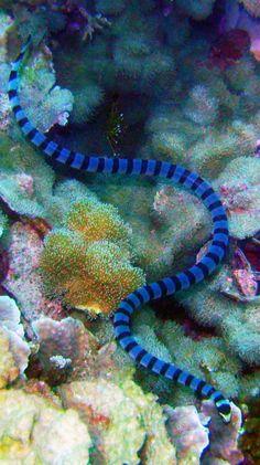 sea snake                                                                                                                                                      More