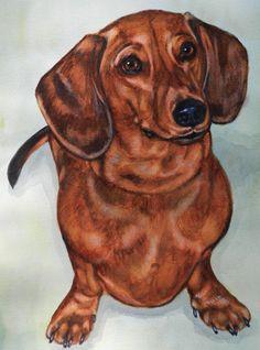 Dachshund Parade Illustrations — cwellsart: Max Watercolor by Carol Wells, 2013 Arte Dachshund, Dachshund Puppies, Weenie Dogs, Dachshund Love, Animal Paintings, Animal Drawings, Scottish Terrier, Dog Art, Cutest Animals