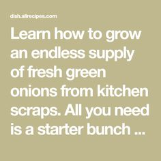Learn how to grow an endless supply of fresh green onions from kitchen scraps. All you need is a starter bunch of green onions, a jar, and fresh water.
