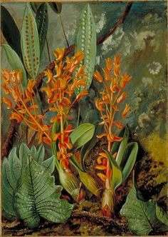 MARIANNE NORTH Orchid and Ferns of the Sarawak