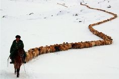 """elsadreams: """" elisamariamatei Kyrgyzstan.   ©suhbat.bozbala """""""
