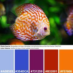 Free Mood Boards: Vibrant Fish Themed – aRtVerse Science Art, Science Nature, Adobe Color Wheel, Color Palette Generator, Discus Fish, Siamese Fighting Fish, Online Coloring, Exotic Fish, Mood Boards