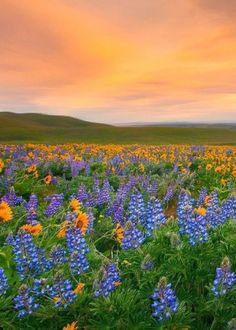 valley-of-flowers-hindu-tourism