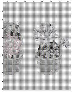 kaktusy bb 4