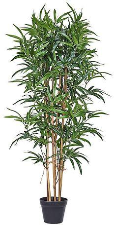 Decorative Bamboo Plant £35 4 feet