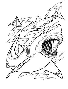 sharks coloring pagesgif 9001171
