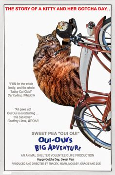 Tabby Cat Club: Oui Oui's Big Post-a-Thon Adventure!