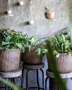 Another shot from the gorgeous little cafe and homeware store I guess my basket fascination is never ending! Bali Furniture, Furniture Ideas, Beach Place, Interior Design Website, Interior Photo, Tropical Plants, Plant Decor, Fascinator, Boho Decor