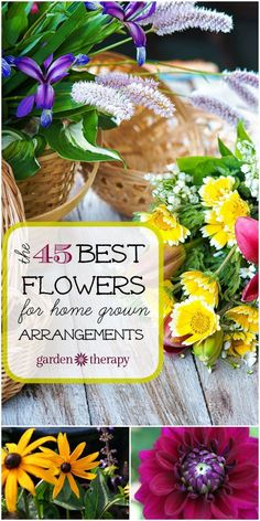 The 45 Best Flowers for Home Grown Arrangements - annuals, perennials, bulbs, trees and shrubs. Plus how to cut and care for your flowers.