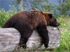 bearly awake...