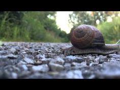 ▶ Slow 4:33 - YouTube